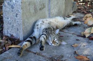 Gammet Cat