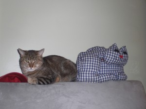 Gammet Cat (left) and TC Fred