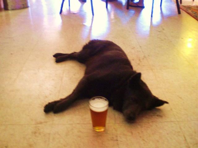 Pup at the Pub