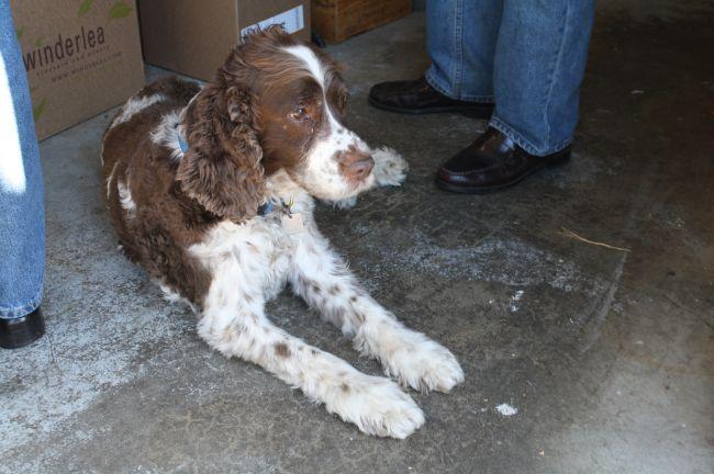 Heater Allen's brewhouse dog