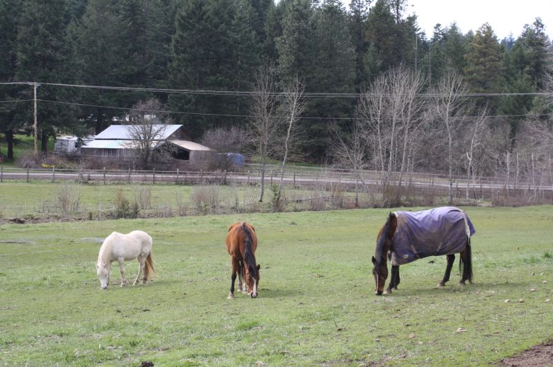 Horses of Logsdon Farm (one with a horse blanket)