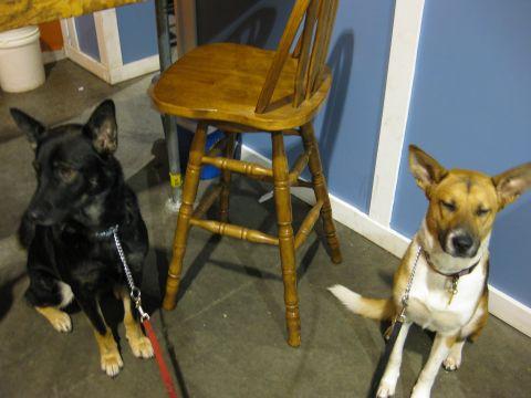 Samson & Tillie