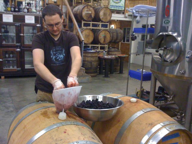 Brewer James McDermot adding fresh blackberries to two of Fremont's aging sours.
