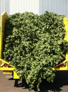 First truckload of fresh hops heads to Seven Brides Brewing