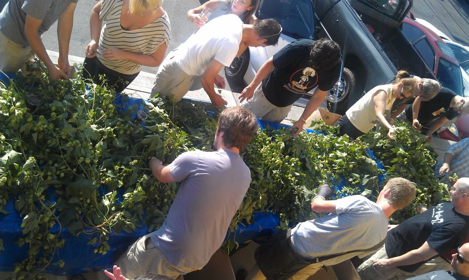 Hop picking party at Two Beers Brewing