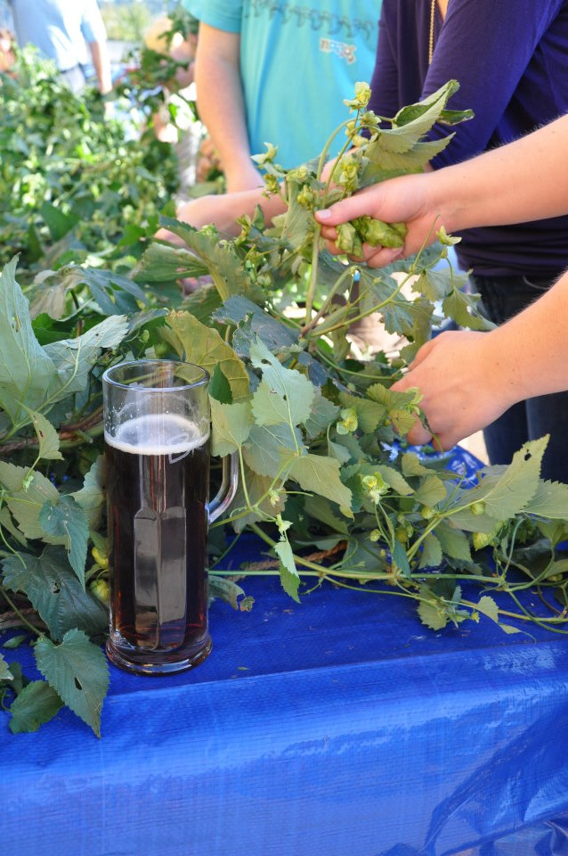 Pickin' fresh hops