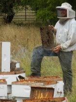 Phil Lorenz of Nectar Creek Honeywine