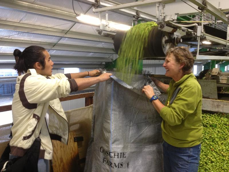 Erin Ohashi of Harvester and Gayle Goschie of Goschie Farms filling a sack with fresh Meridian hops.