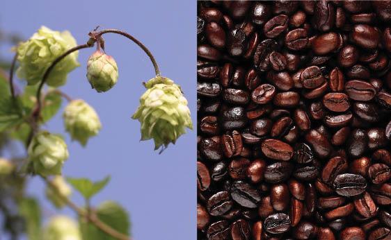 Hops & Beans