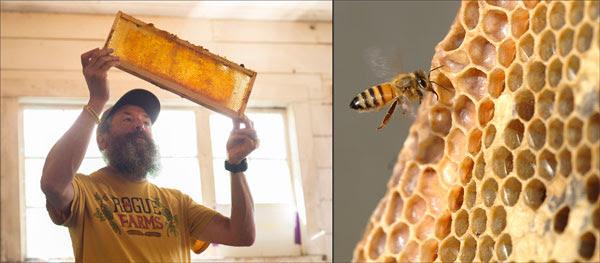 Rogue Ales John Maier Inspecting the Honey