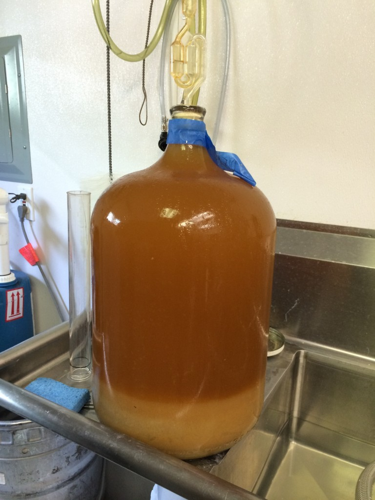 Cider Riot! Carboy of Van Diemen's Land