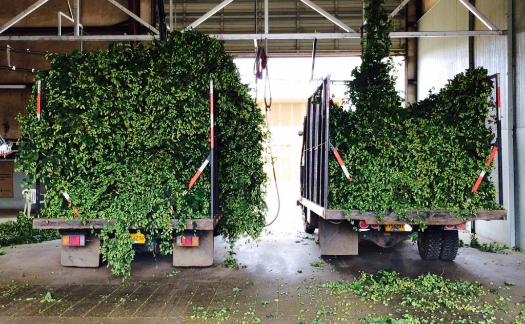 Sodbuster Farms Fresh Hop Trucks