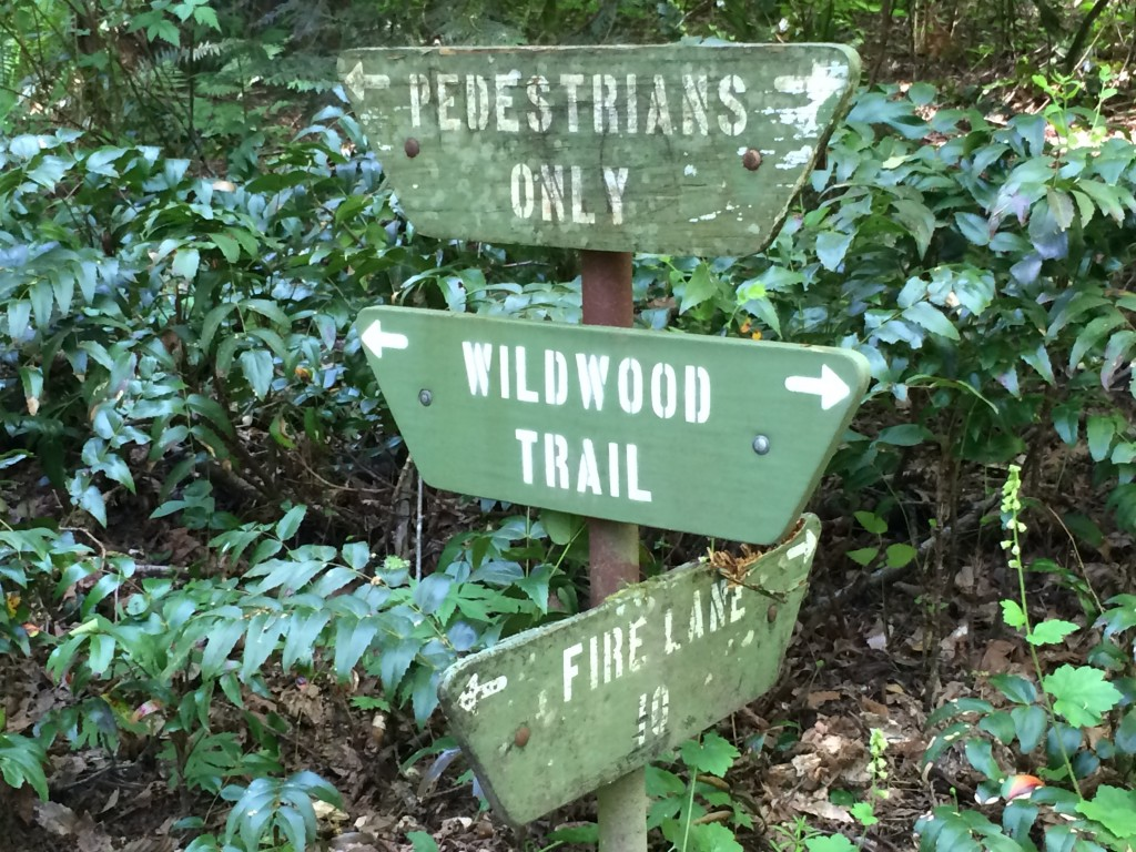 Wildwood Trail in Forest Park during BMBW