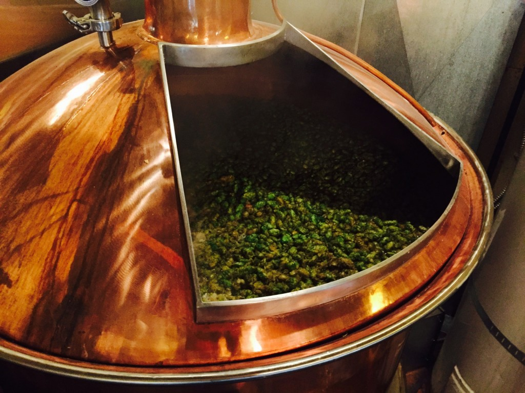 Fresh Simcoe Hops in a McMenamins Brewhouse