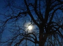 Halloween Moon and Tree