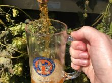 A pour from the Oregon Brewers Festival Ceremonial Keg of Laurelwood Brewing's Workhorse IPA. (photo by Cat Stelzer)