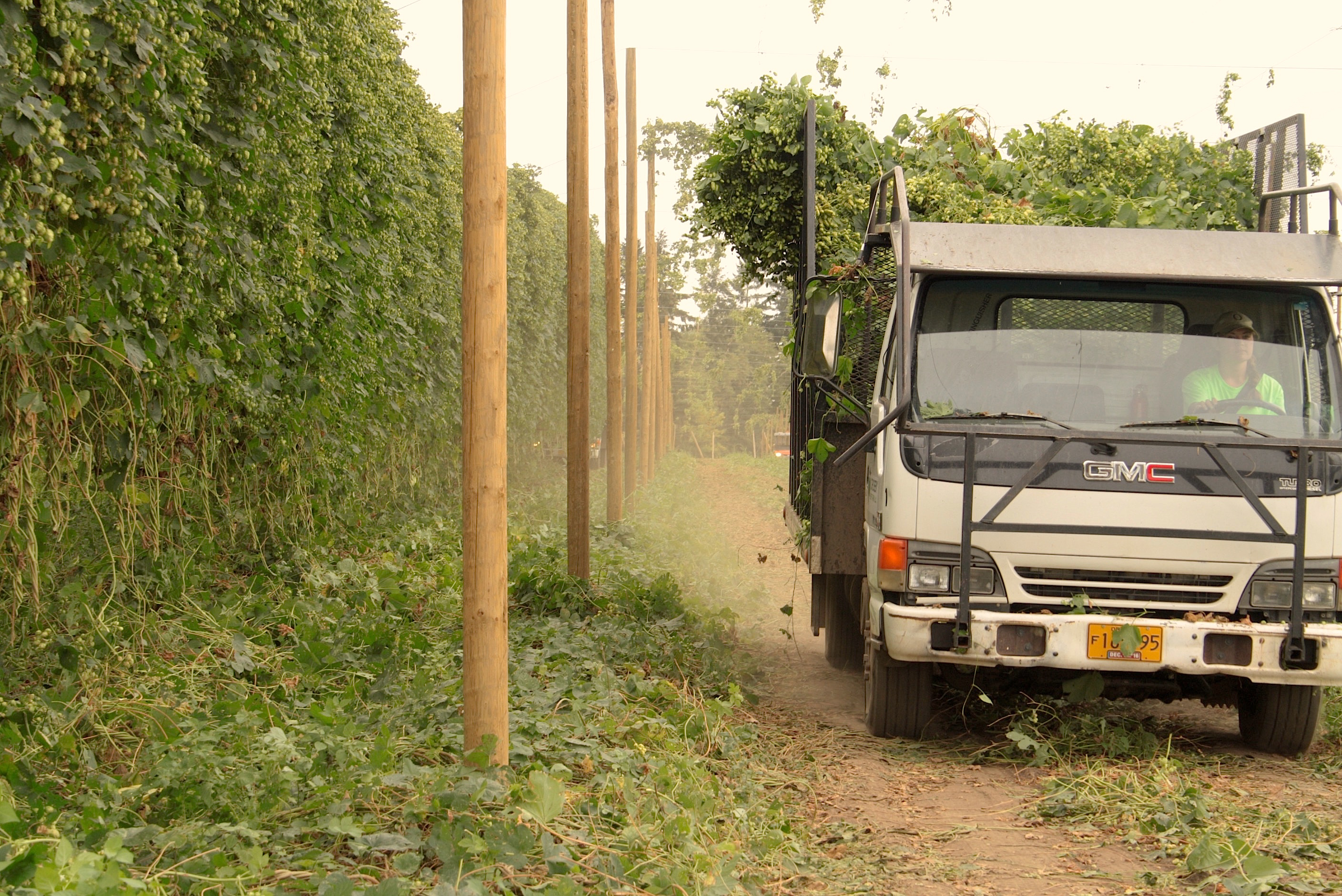 A Crosby Hop Farm truck leaving the hop yard with freshly picked Amarillo Hops during the 2016 harvest. (photo by Ryan Spencer)