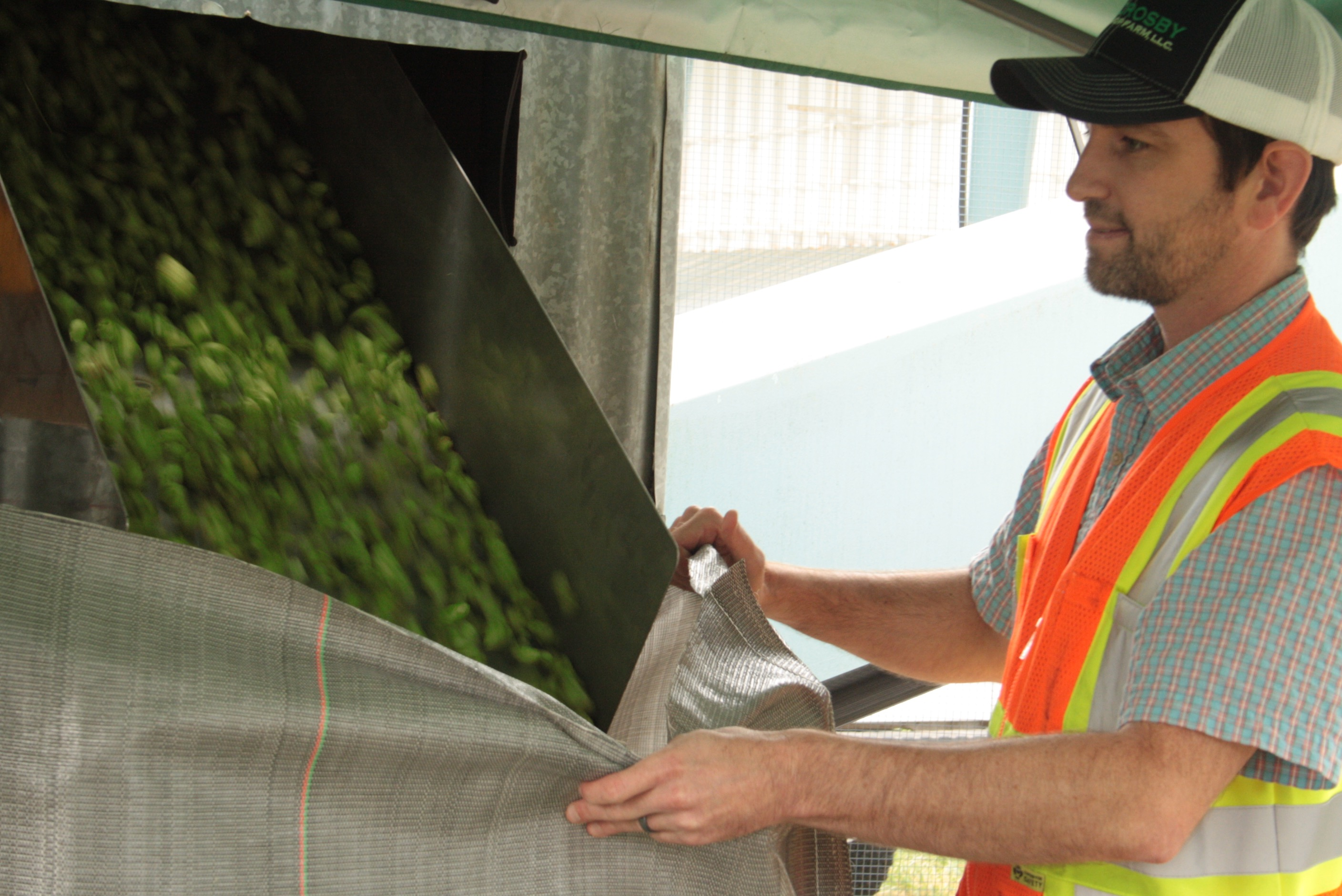 Bagging freshly picked Amarillo Hops at Crosby Hop Farm during the 2016 harvest. (photo by Ryan Spencer)