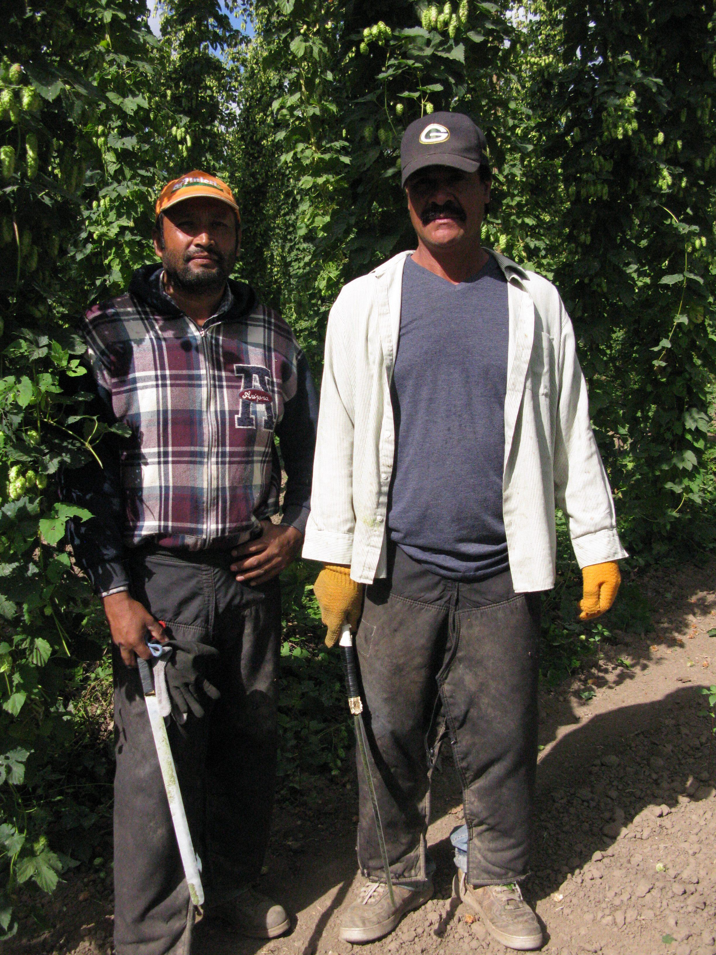 Machete men of the hop fields. (FoystonFoto)