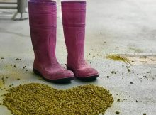 image of hops and Pink Boots courtesy of Yakima Chief Hops
