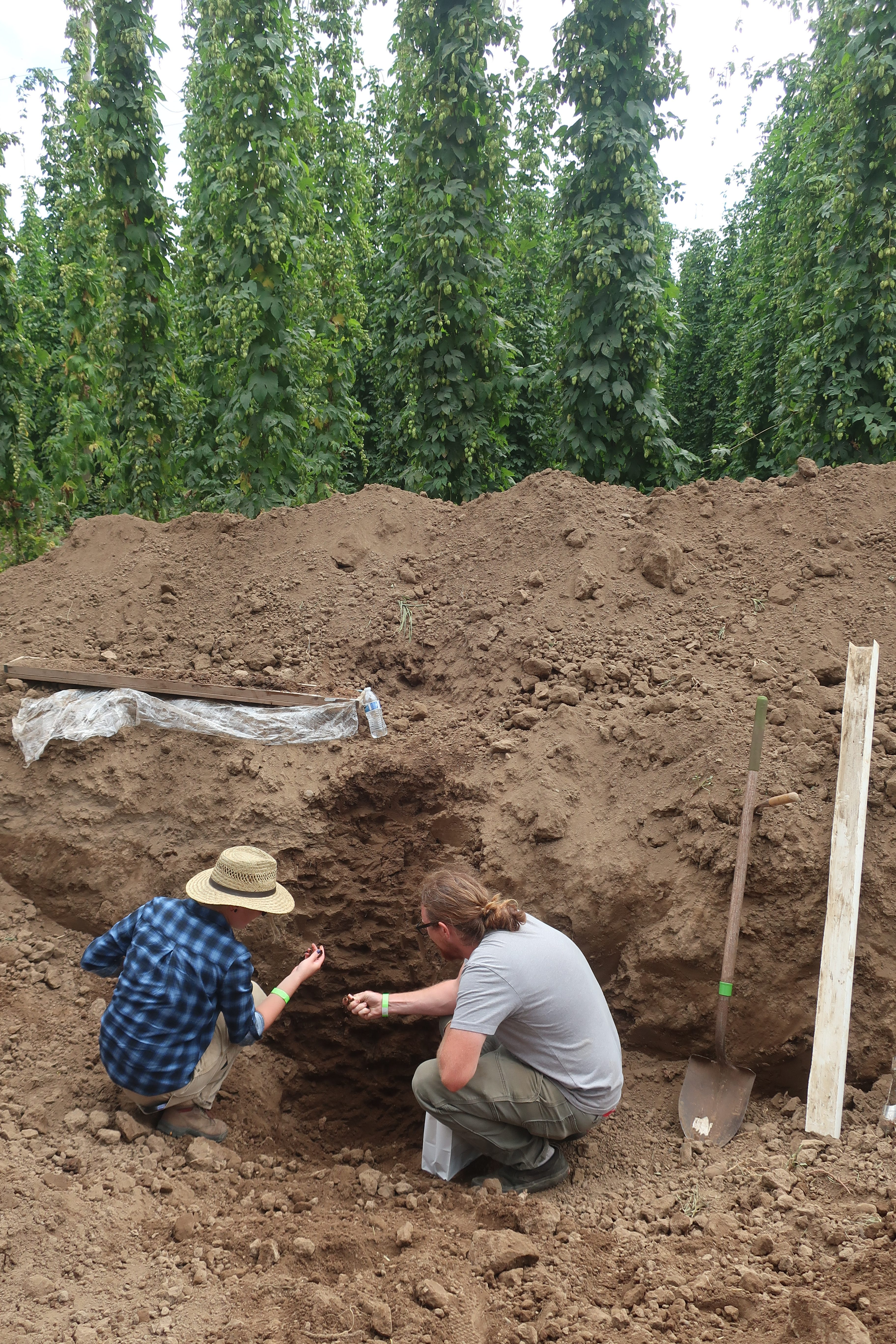 Inspecting the soil during the Bine to Beer Hop Terroir symposium at Coleman Agriculture.