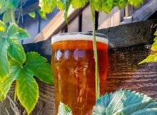 image of Sizzle Juice Fresh Hop IPA courtesy of Cascade Lakes Brewing