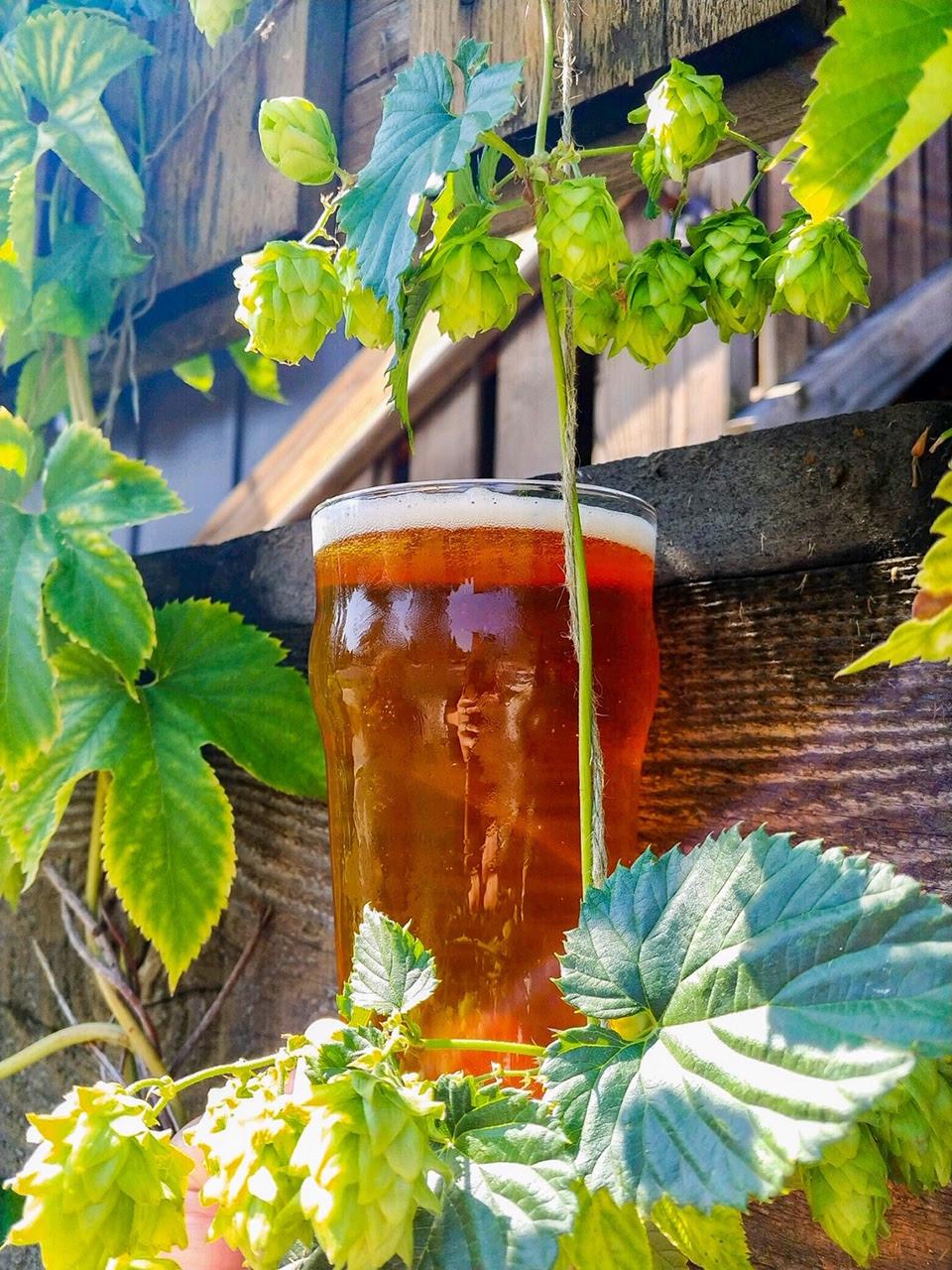 image of Sizzle Juice Fresh Hop IPA courtesy of Cascade Lakes Brewing