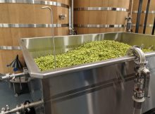 image of fresh hops courtesy of Von Ebert Brewing - Glendoveer