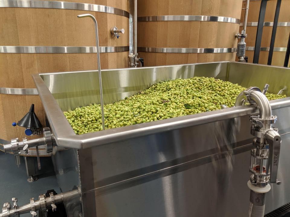 image of fresh hops courtesy of Von Ebert Brewing - Glendoveer