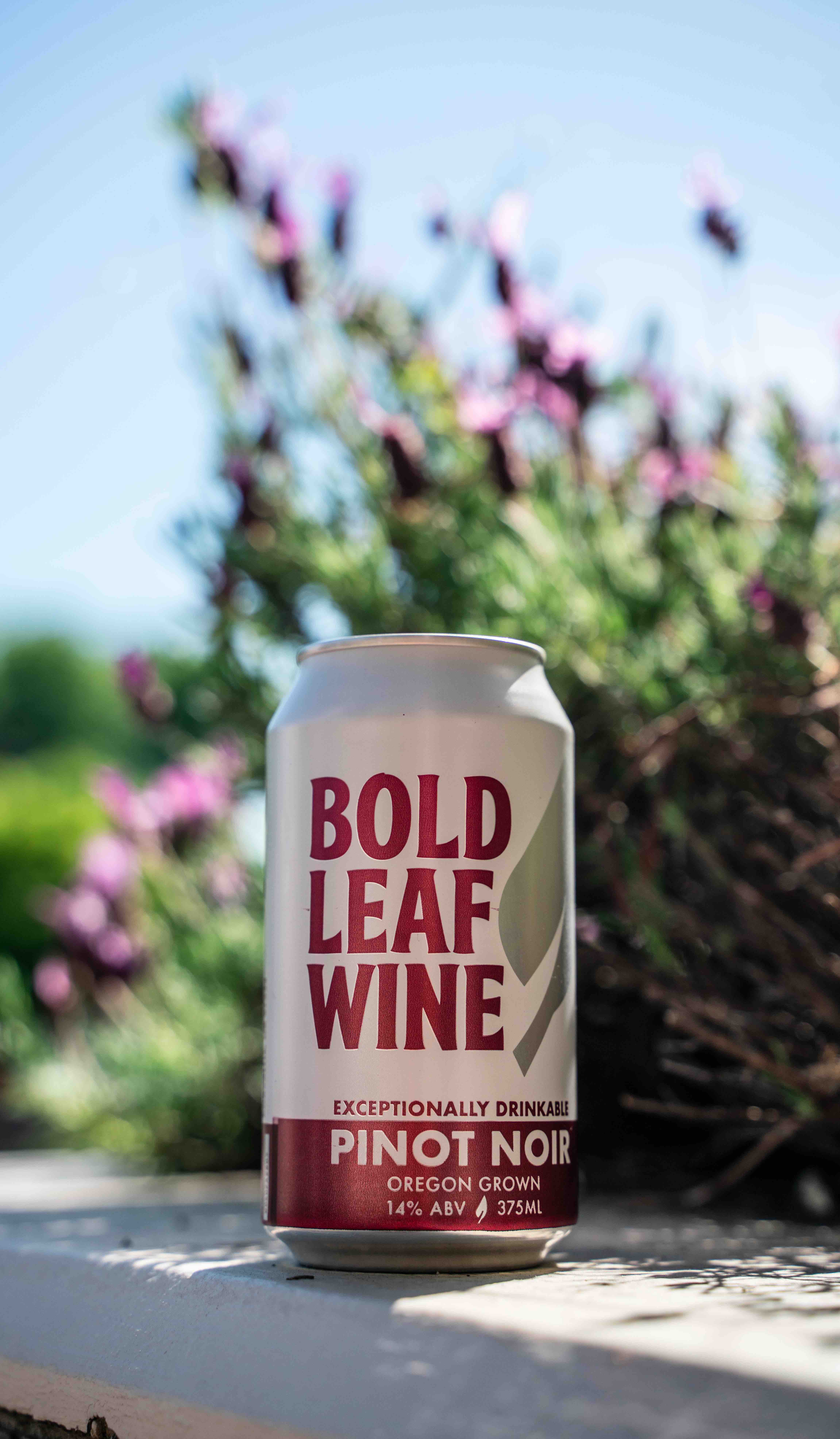 image Pinot Noir courtesy of Bold Leaf Wine