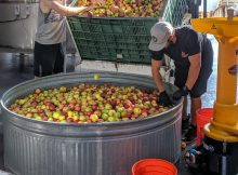image courtesy of Portland Cider Co.