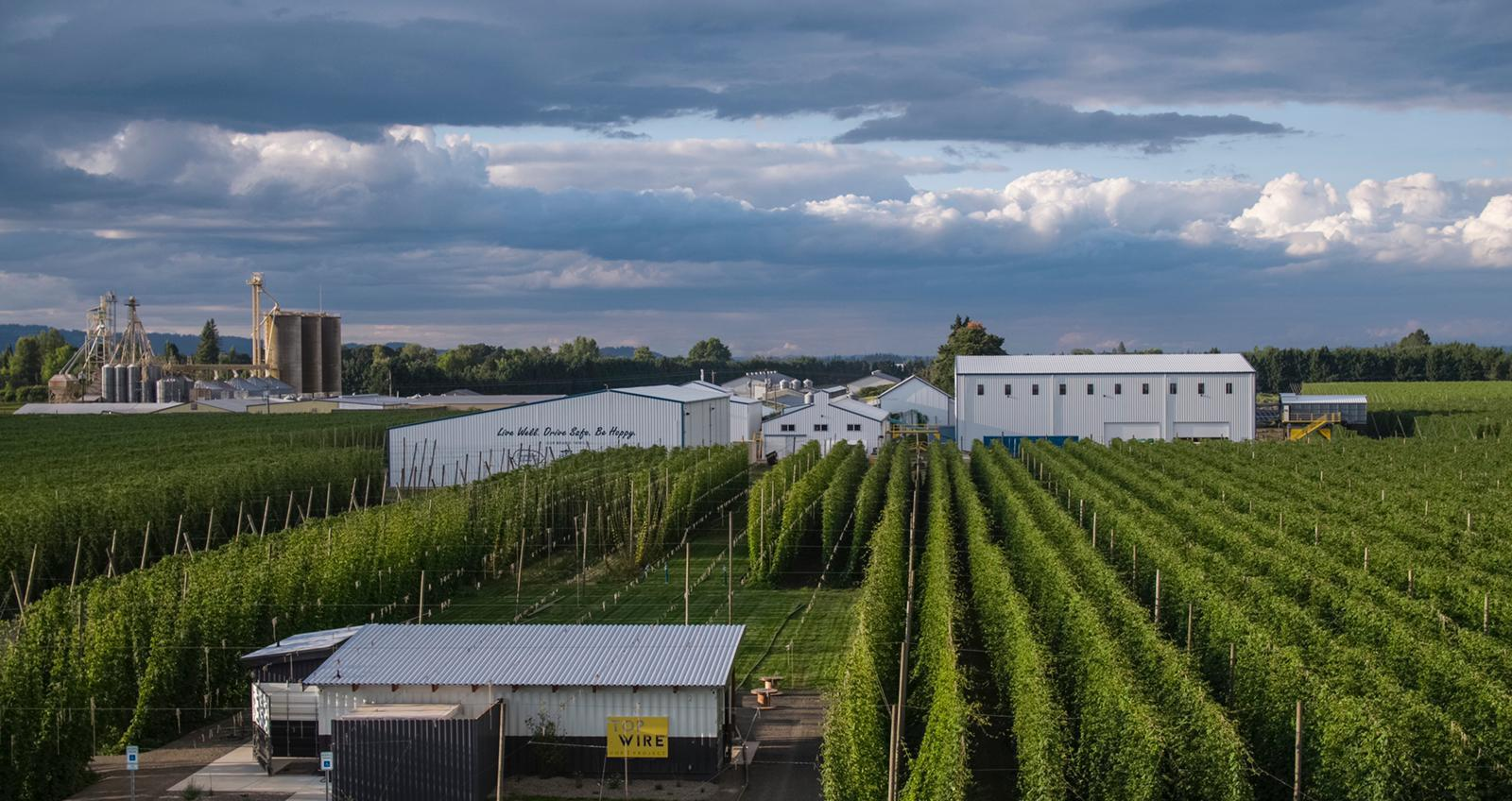 image of the hop fields courtesy of TopWire Hop Project