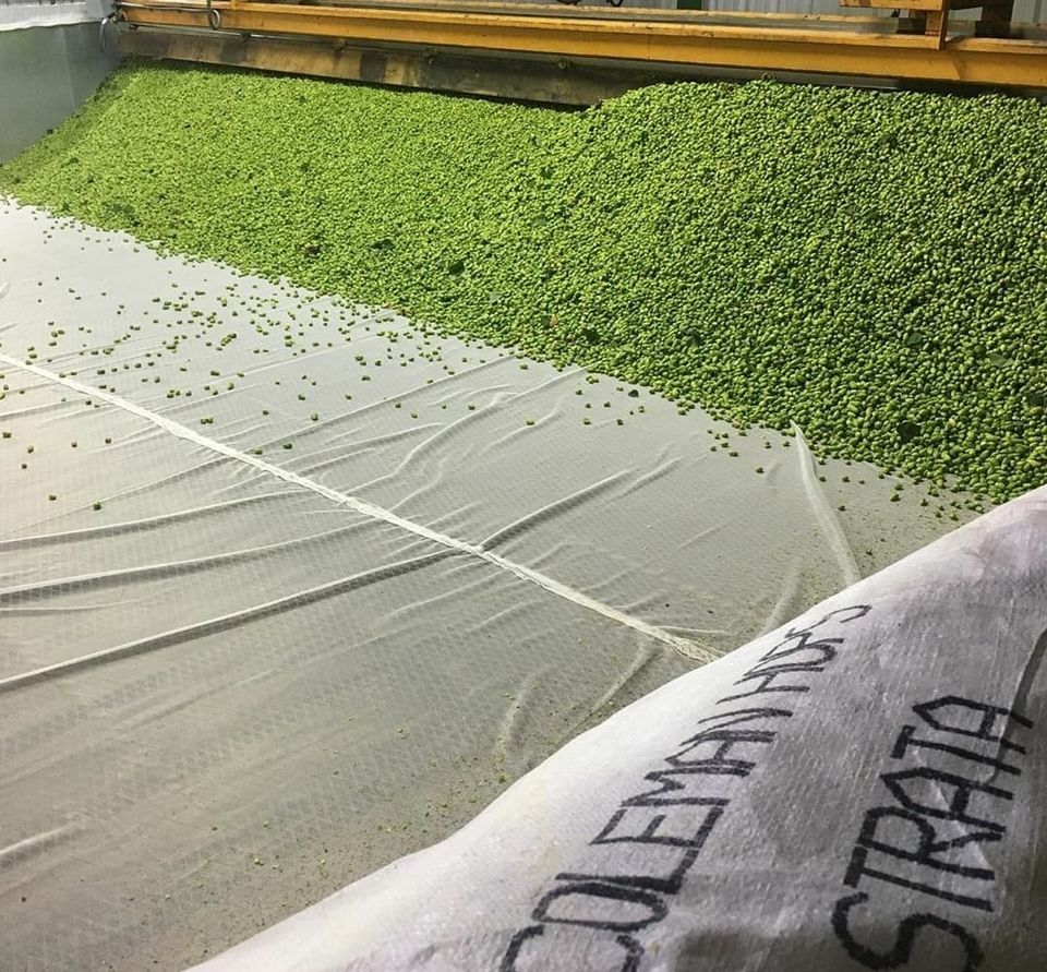 image of freshly picked hops from Coleman Agriculture courtesy of Von Ebert Brewing