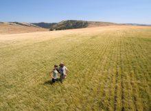 image of Alyssa and Phil amongst barley courtesy of Mainstem Malt
