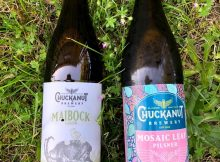 image of Maibock & Mosaic Leaf Pilsner courtesy of Chuckanut Brewery