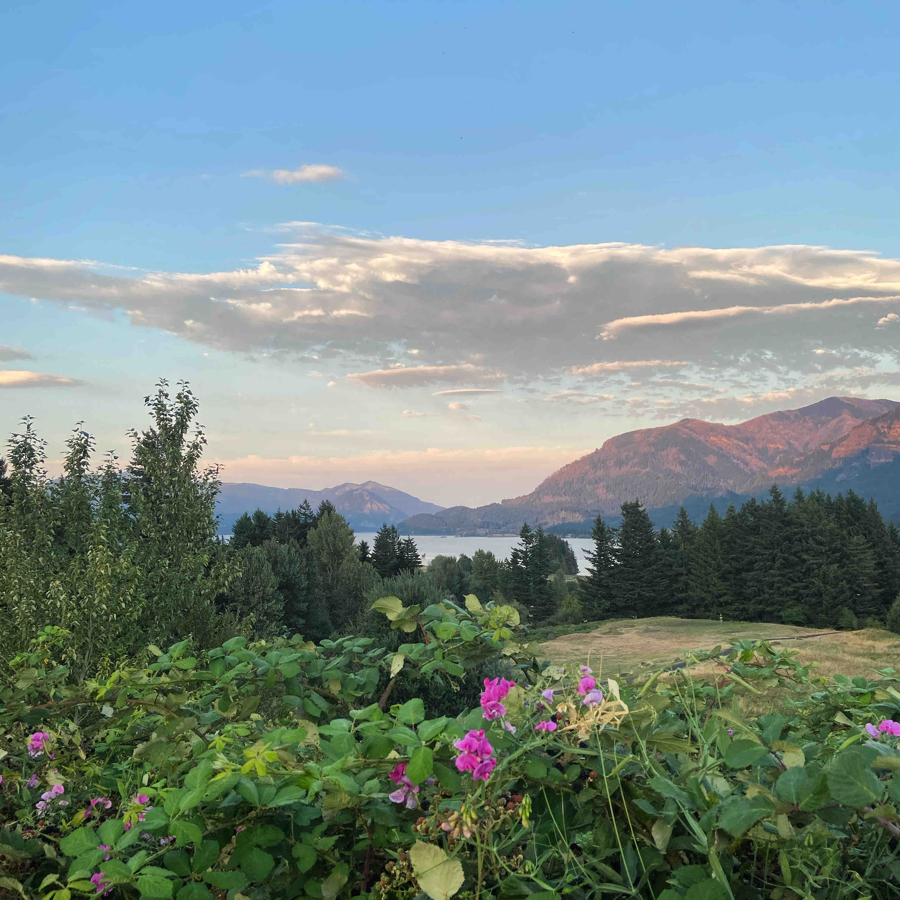 A view of the Columbia River Gorge from the 8th tee box on The Backyard Disc Course at Skamania Lodge.